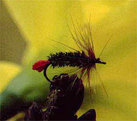 an introduction to the analysis of fly fishing Fishing the dry fly introduction:  it is an approach based on observation and analysis which i call a systematic approach to flyfishing.